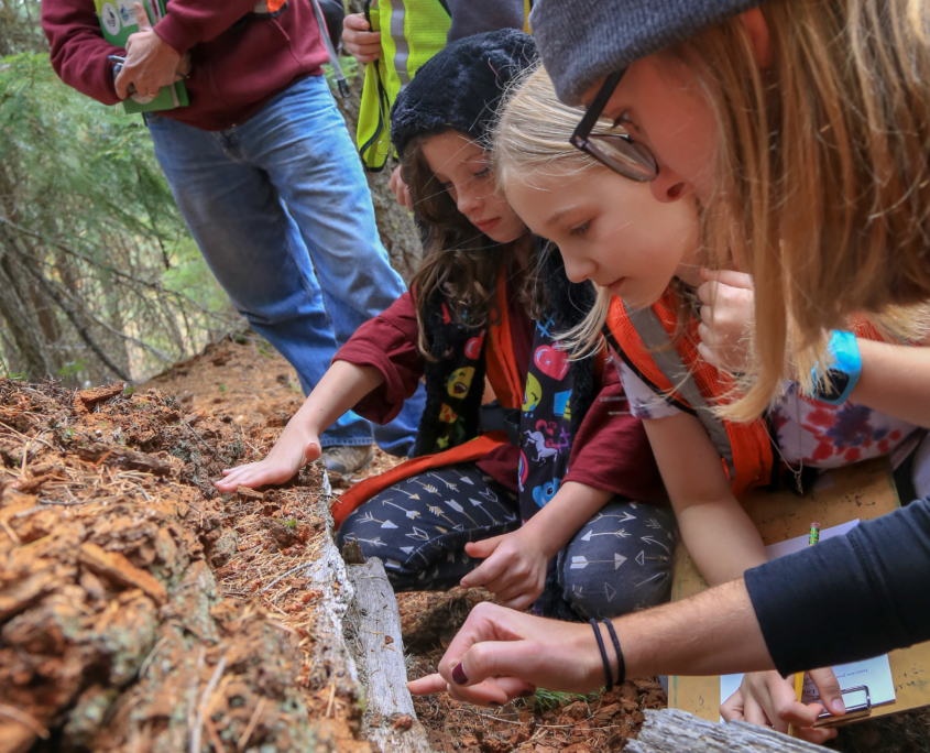 Students doing activity in the woods next to log